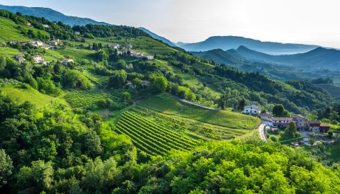 Prosecco girls tours